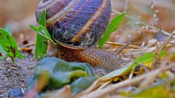 snail on the ground macro 4k