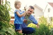 Fotografie Glückliche Familie ist Abholung Karotten im Garten