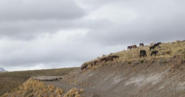 Juh, kecske, ló, gyalogos gondolta kavics közúti és a hegyvidéki lejtőin, esetlen, cowboy, irányadó az állomány az állatok, hogy telelő. Trashumancia: Hagyományos, kulturális mozgó állatok melegebb zónák