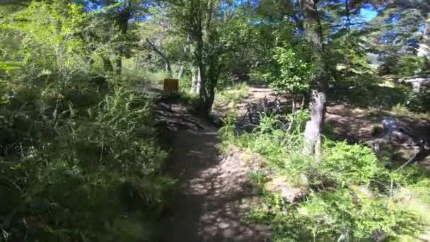 Pohybující se podél cesty mezi stromy, trávy a keřů, přes dřevo most přes datový proud. Nothofagus lesy. Na pozadí hory. Lanin Národní Park. Patagonie