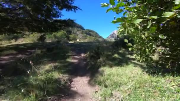 Moving along path ascending between grasses and trees. Surroundings of Nothofagus woods and grasslands. Scene ends with view to Piedra Mala mountain. Lanin National Park. Patagonia