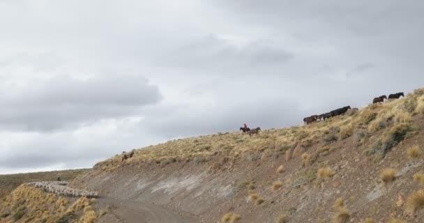 Ovce, kozy, koně, pěší přes štěrk silniční a horské svahy, Gaucho, kovboji, vedení zásob zvířat k přezimování. Trashumancia: Tradiční, kulturní přesunu zvířat do teplejších oblastí