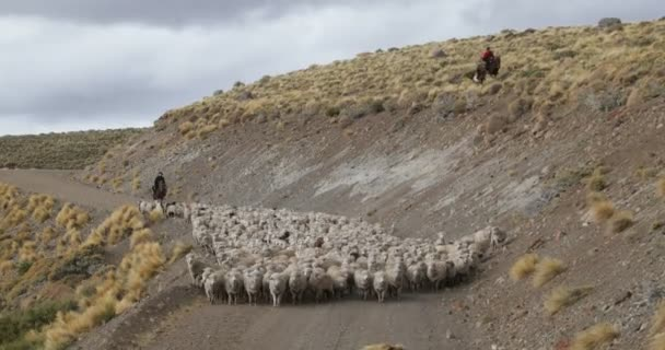 Sheep, goats walking through gravel road and mountain slopes, Gaucho, cowboy, guiding the stock of animals to wintering. Trashumancia: Traditional, cultural moving of animals to warmer zones