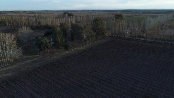 Aerial drone scene of farm, parcels, grapes and wine production, plantation lines in San Rafael, Mendoza. Autumn, fall. Camera moving downwards. pruning season. Sunset, golden hour with long shadows.