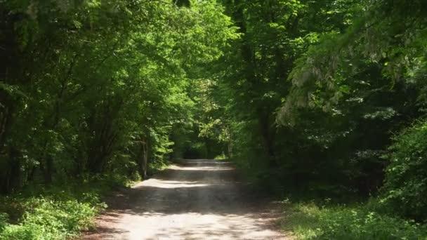 Steadicam Shot horský mokré les s mechem kameny a kořeny stromů, osobní perspektivy pohledu, 4k, pomalý pohyb