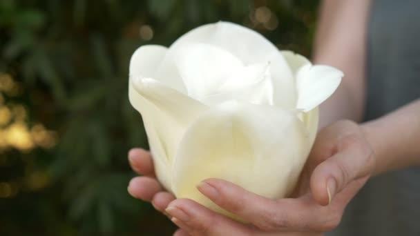 Krásná bílá magnolia květina v ženských rukou, detail. 4k, pomalý pohyb