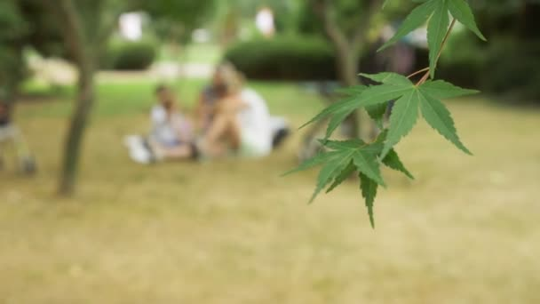 green leaves of trees in focus. people who have a rest and walk in the city park blur. 4k, slow motion