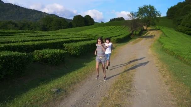 šťastné děti pobíhat čajové plantáže během exkurze. pojetí cestování, volný čas. Životní styl. 4k.
