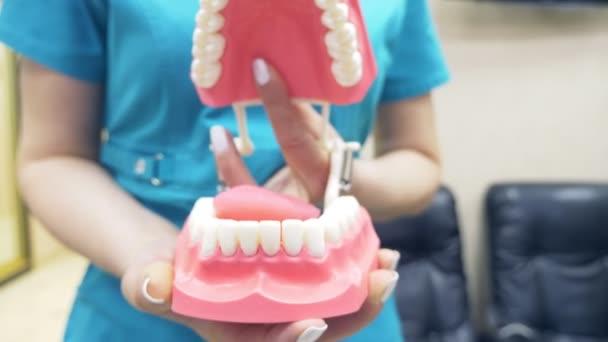 El Dentista Muestra La Estructura De La Boca Con La Ayuda De Un Modelo De La Mandíbula Humana 4k Cámara Lenta