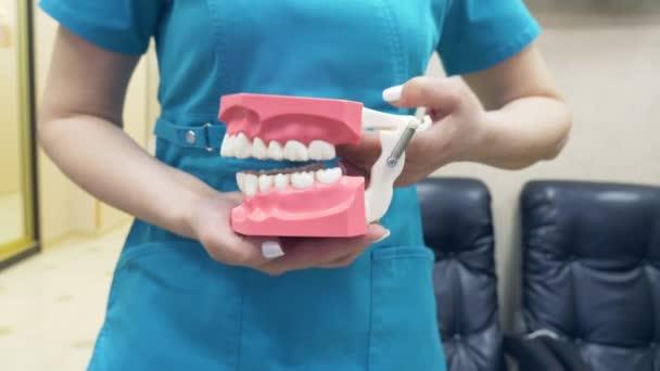 Zubař ukazuje strukturu ústí s pomocí modelu lidské čelisti. 4k, pomalý pohyb