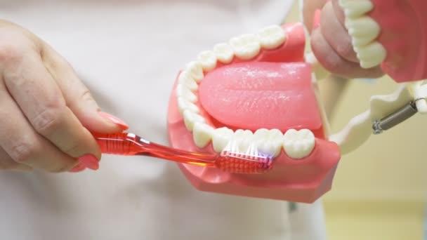 Zubař pomocí mock čelist a kartáček naučit pacienta správným čištěním zubů