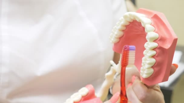 Dentist using jaw mock and toothbrush to teach patient correct cleaning of teeth, 4k, slow motion