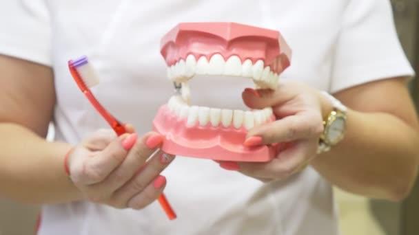 Zubař pomocí mock čelist a kartáček naučit pacienta správným čištěním zubů, 4k, pomalý pohyb