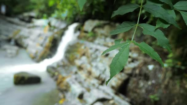 Scenic nature of a beautiful waterfall and emerald of a fresh water lake in a wild jungle forest environment. 4k, slow motion