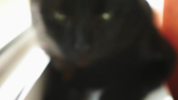 Schwarze Katze, die sitzt am Fenster