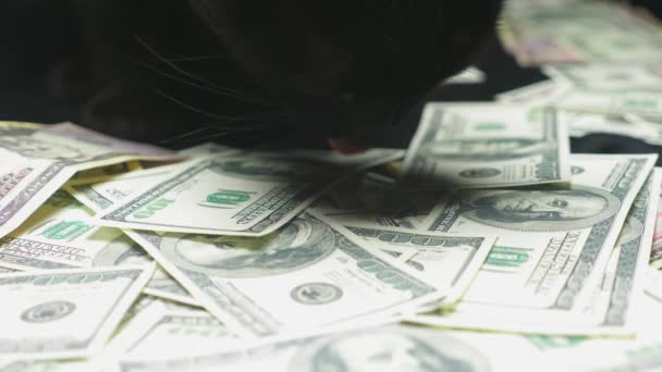 Dollar and a black cat