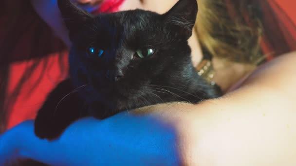 schöne junge sexy Frau in einem schwarzen Hexenkostüm und Hut, mit einem Besen und einer schwarzen Katze in ihren Händen, die in die Kamera schaut und lächelt. Kopierraum. 4k, Zeitlupe