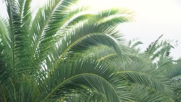 palm avenue in the city park. stadikam. 4k, slow-motion.