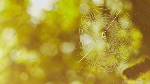 Pókháló magas, egy fa, egy sűrű erdő. A fák a moss v tükröződést. Tündér erdő. Halloween