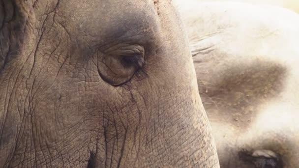 közeli, egy elefánt az állatkertben van zöld füvet eszik