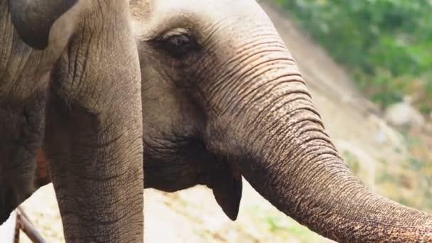 detail, slon v zoo je jíst zelené trávy