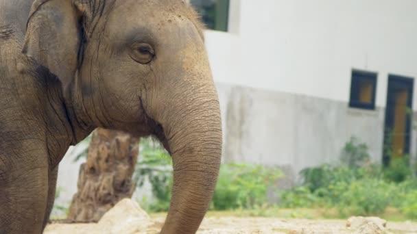 detail, slon v zoo