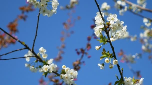Blooming tree against the blue sky. beautiful flowers on a branch in the spring park