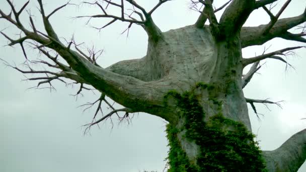 Starý mrtvý strom proti šedé obloze. představa horor Halloween. místo pro kopírování