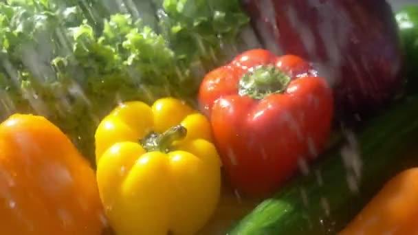 Fresh vegetables on a dark background in the studio under jets of rain. autumn harvest concept