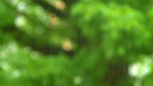 přirozené pozadí. Uzavření deště na rozmazaný podklad zeleného listí. letní déšť.