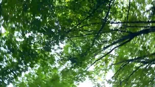 pohled na zeleň stromů v lese a oblohu zdola nahoru, vířící.