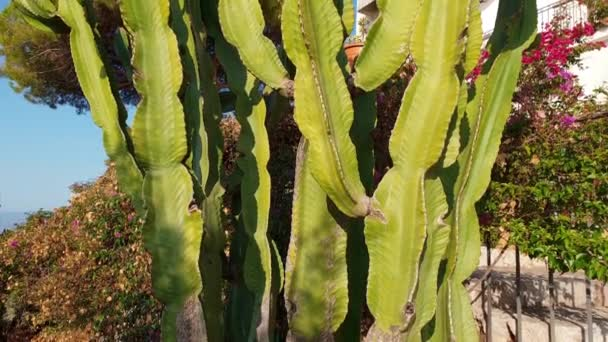 Fényképezőgép csúszik, bár kaktusz növény-Olaszország, Szicília