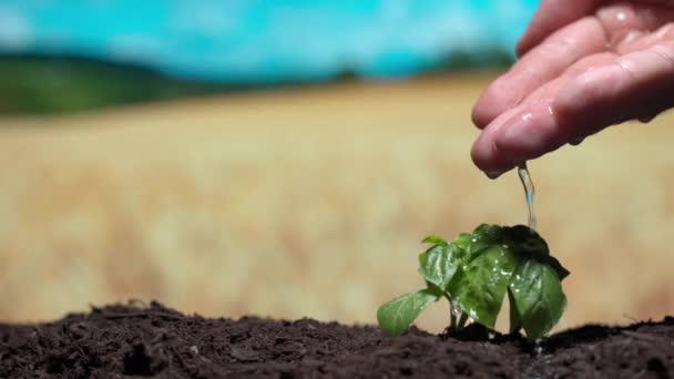 Problém sucha, vyhynutí flóry kolem planety. Osoby ručně vylévání vody na malé zelené rostliny klíčky pro výživu a rychle rostoucí, zachránit planetu a ekologii koncept