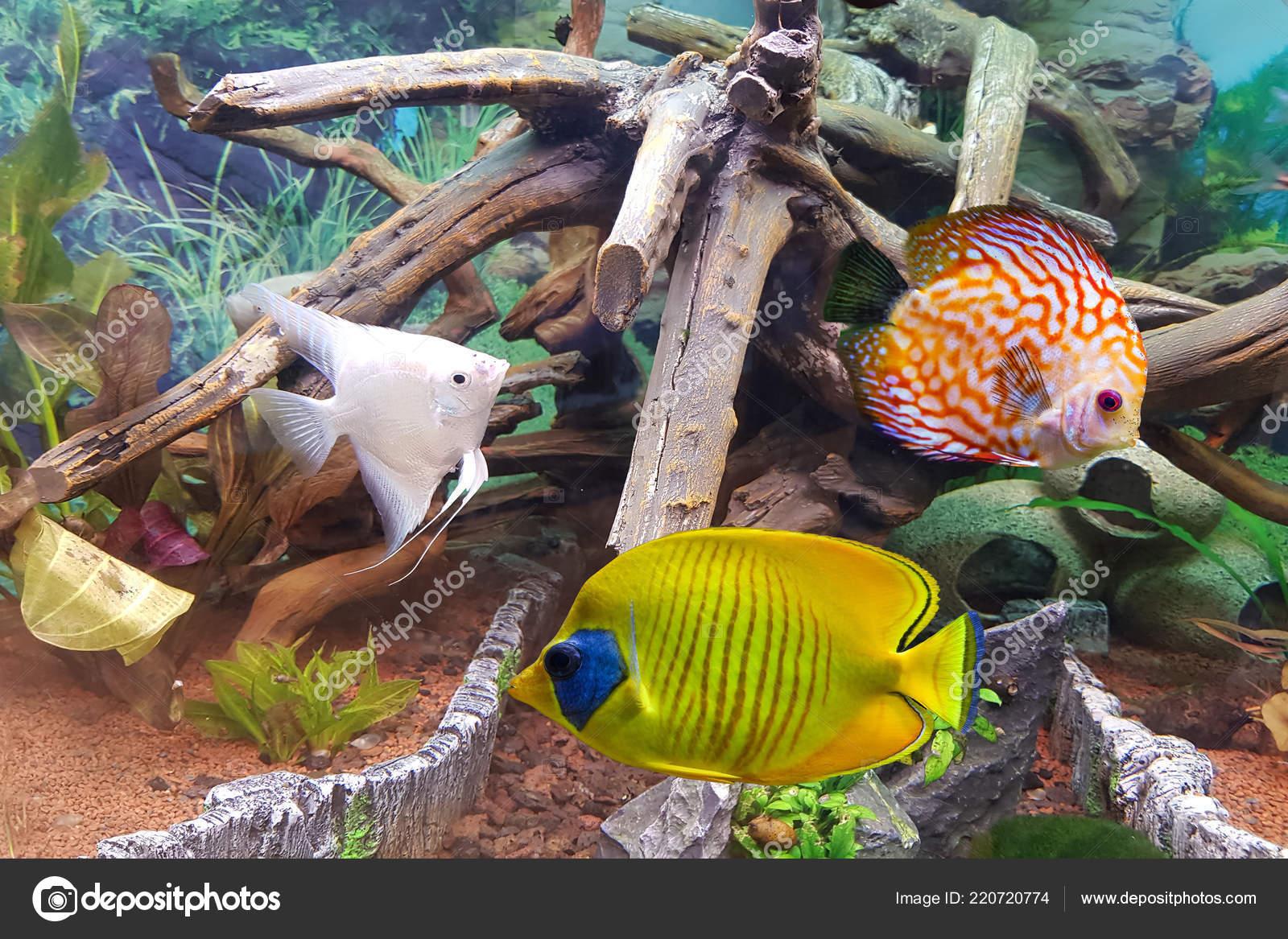 indoor aquarium tropical freshwater aquarium green plants decoration