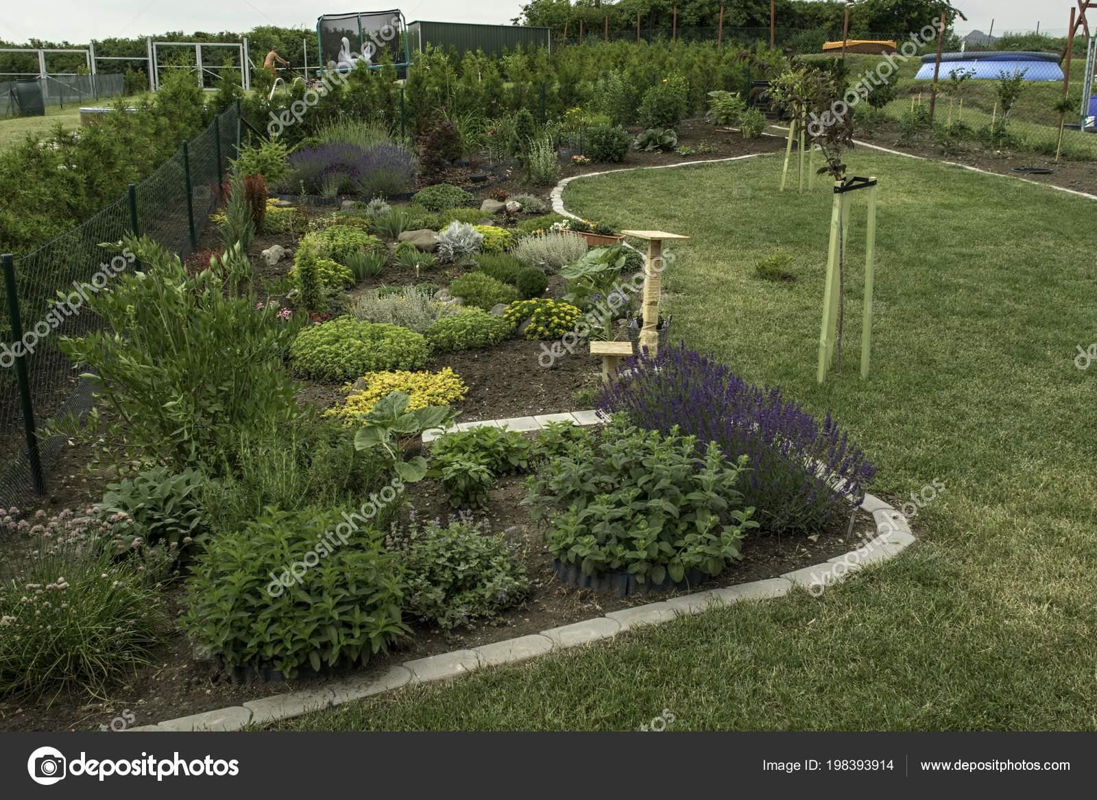 Jardin Ornement Maison Été Plein Plantes — Photographie ...