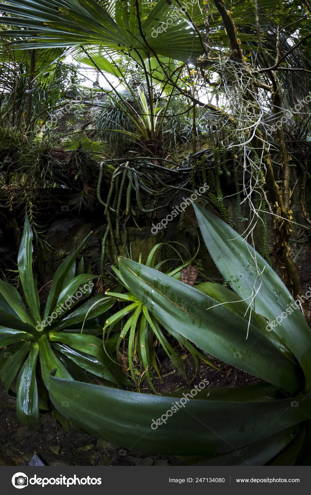 Aloe In Giardino rainforest botanical garden — stock photo © tylinek #247134080