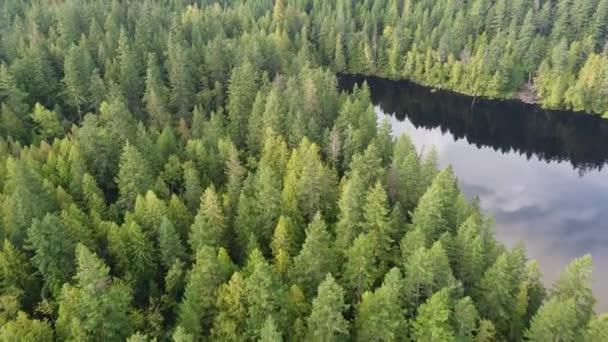 Fliegen Sie über den See mit der Himmelsspiegelung und angrenzendem grünen Kiefernwald