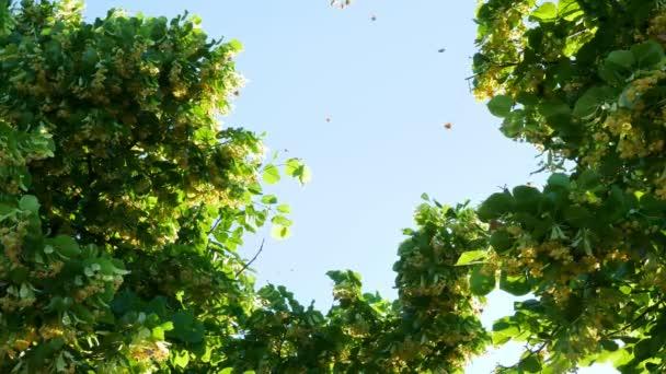 Monarch butterfly flies around tree. Summer.
