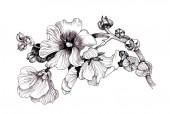 Fényképek Virágos grafikus vonal kézzel rajzolt bw