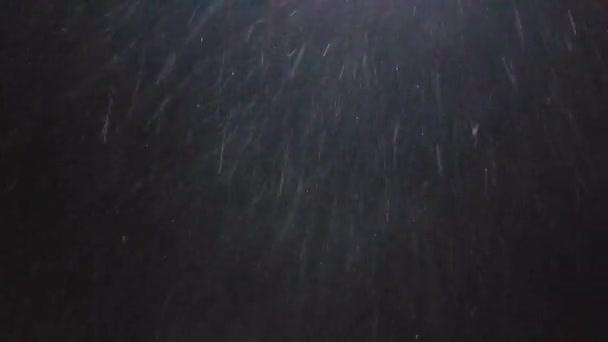 Cadendo di veri fiocchi di neve, neve pesante, bufera di neve meteo, girato su sfondo nero, opaco, grandangolo, loop senza soluzione di continuità animazione, isolato, perfetto per composizione digitale, post-produzione.