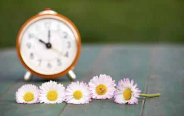 Daylight savings, spring forward concept - web banner of a red alarm clock and daisy flowers