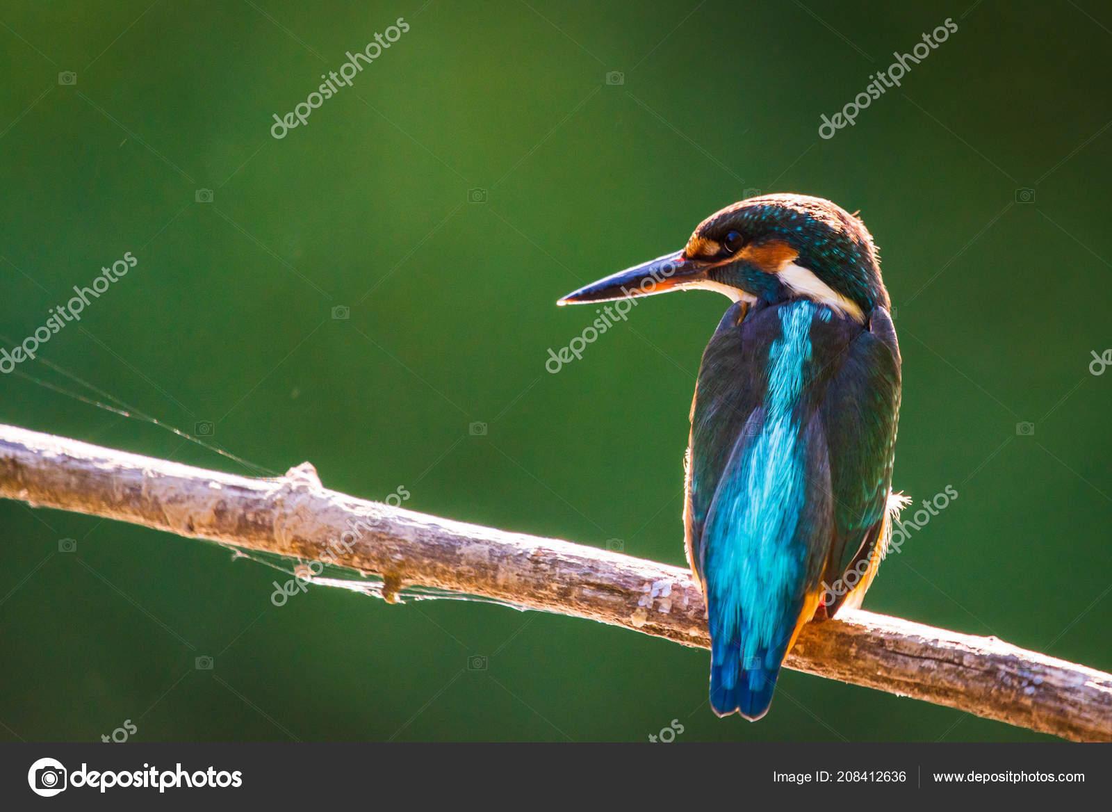 Ποτάμι μεγάλο πουλί