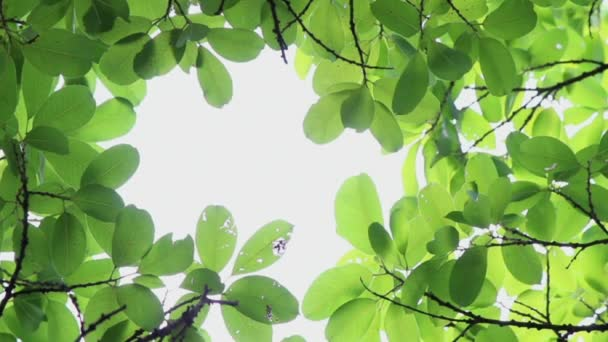 Footage backlit tree leaves in home flower garden on sunny day with white background.