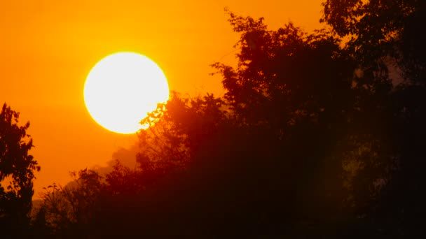 Sonnenaufgangssonne in feurig orangefarbenem Himmel steigt schnell über Dschungel auf.