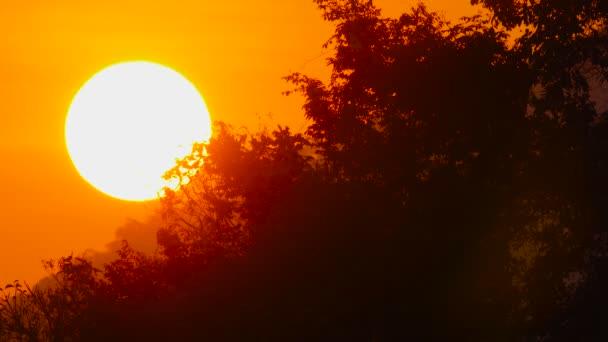 Slunce slunce v ohnivé rudé obloze stoupající nad džunglí.