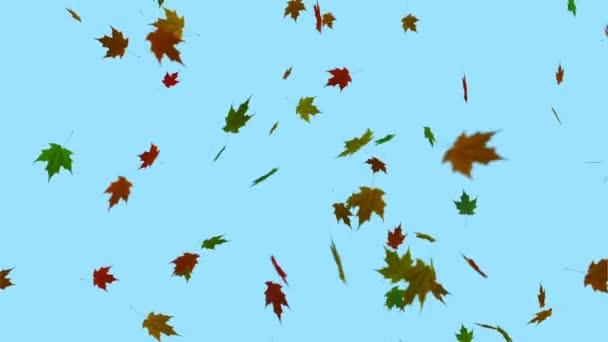 Fallender Ahorn hinterlässt blaue Hintergrundanimation. Herbst. nahtlose Looping-Animation.