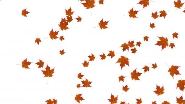 Fallen und Drehen Ahorngelb Blätter blauen Hintergrund Animation. Herbst. nahtlose Looping-Animation.