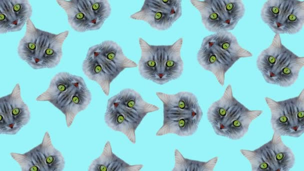 Cat style wiggle moving color background. Abstract graphics in trendy colors and style. Seamless looped motion graphic animation.