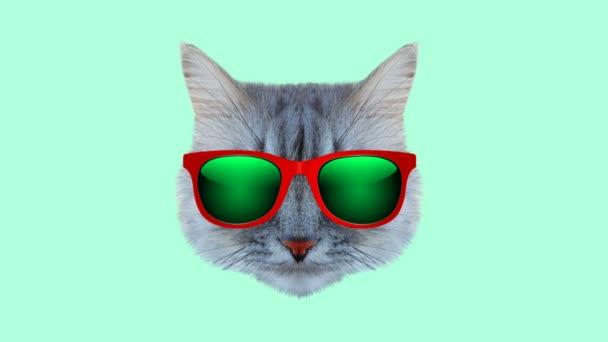 Macska -val szemüveg stílus tekergőzés mozgó szín háttér. Absztrakt grafika trendi színekben és stílusban. Zökkenőmentes hurkolt mozgás grafikus animáció.