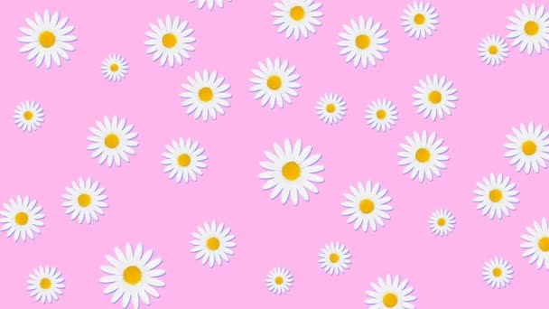 Minimal motion design animation. Chamomile flowers rotating at color background. Abstract graphics in trendy colors and style. Seamless looping animation.